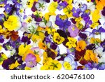 edible flowers   food flowers   ... | Shutterstock . vector #620476100