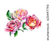 bouquet of rose and tulips ... | Shutterstock . vector #620497793