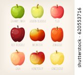 set of apples with names.... | Shutterstock .eps vector #620553716