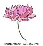 hand drawn lotus flower for...   Shutterstock .eps vector #620559698