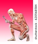 male muscle anatomy searching... | Shutterstock . vector #620568584