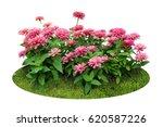 pink flower bush tree isolated... | Shutterstock . vector #620587226