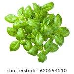 basil isolated on white... | Shutterstock . vector #620594510