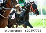 Stock photo black thoroughbred horse on the race 620597738