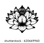 black and white lotus... | Shutterstock . vector #620669960