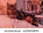 View Of Sleeping Cat Lying On...