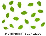 basil leaves isolated on white... | Shutterstock . vector #620712200