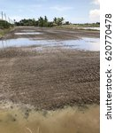 Small photo of Good soils or loam for farming rice. This is moist and a mix of sand, silt and clay.