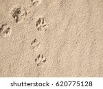 Footprints Dog On Beach