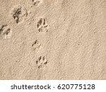 Footprints Dog On Beach