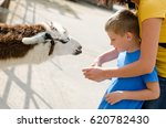 Mother And Child Feeds The Llama