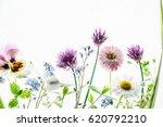 summer flowers | Shutterstock . vector #620792210