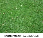 green grass field texture as... | Shutterstock . vector #620830268