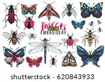 dragonfly  brown bug  forest... | Shutterstock .eps vector #620843933