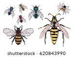 yellow  red  blue  green fly ... | Shutterstock .eps vector #620843990