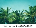 coconut palm trees  beautiful... | Shutterstock . vector #620869010
