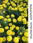 Photo Of Blossom Yellow...