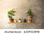 tree pot and cactus in pots on... | Shutterstock . vector #620932898