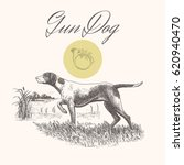 Dog. Hunting. Gun Dog Isolated...
