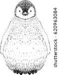baby penguin hand drawn... | Shutterstock . vector #620963084
