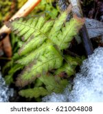 Hdr Photo Of A Small Fern Leaf...
