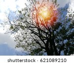 beautiful tree and pink flowers ... | Shutterstock . vector #621089210