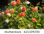 deliciously   spicy scented  ... | Shutterstock . vector #621109250