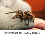 Arachnophobia  A Tarantula...