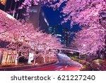 tokyo midtown's evening cherry...   Shutterstock . vector #621227240