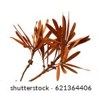set of dry flat leaves isolated ... | Shutterstock . vector #621364406