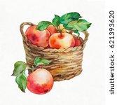 apples in a basket. watercolor... | Shutterstock . vector #621393620