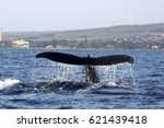 Small photo of Whale Tale