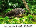 giant anteater | Shutterstock . vector #621452600