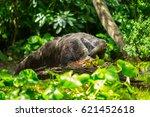 giant anteater | Shutterstock . vector #621452618