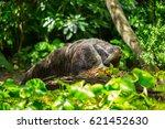 giant anteater | Shutterstock . vector #621452630