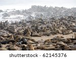 Seal Fur Colony In Cape Cross ...