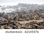 Seal Fur Colony In Cape Cross ...