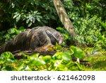 giant anteater | Shutterstock . vector #621462098