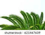 green palm leaves  isolated... | Shutterstock . vector #621467639