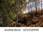 in a birch grove | Shutterstock . vector #621510440