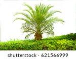 palm tree | Shutterstock . vector #621566999