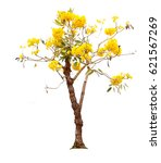 yellow tree | Shutterstock . vector #621567269