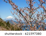 fuji and cherry blossoms seen... | Shutterstock . vector #621597380
