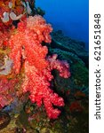 Small photo of Bright red soft coral on the tropical reef, deep blue background. Scuba diving underwater picture, Octocorallia also known Alcyonaria.