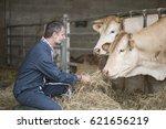Senior Farmer With Heifers