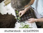 senior gardener making cuttings | Shutterstock . vector #621659054
