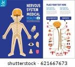 system nervous. sympathetic... | Shutterstock .eps vector #621667673
