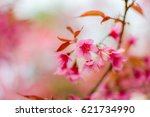 cherry blossom flower in winter ... | Shutterstock . vector #621734990