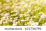 Beautiful Field Of Daisy...