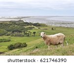 Sheep Standing On Hill In Fron...